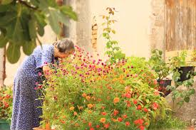 elderly women gardening
