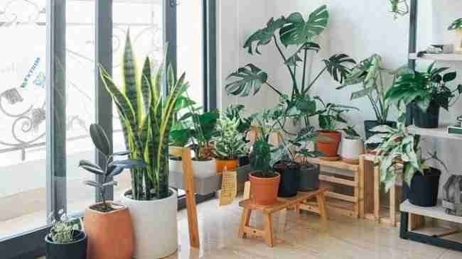 mutiple potted plnats of varying sizes and shapes indoors by the window in the sunlight