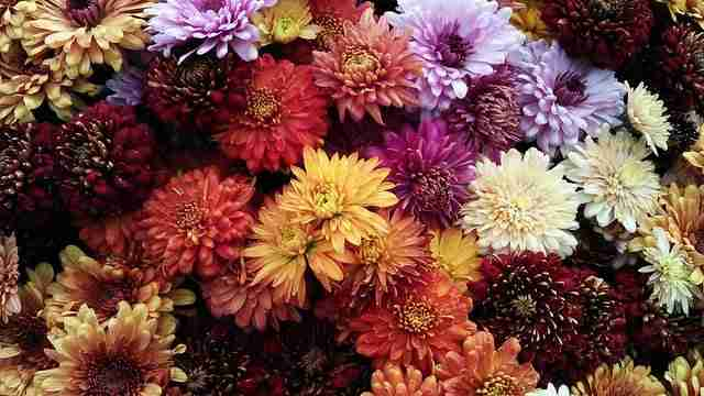many flowers bunched together with different types, shapes, and colors
